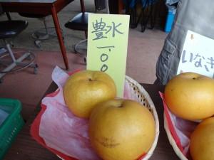 稲城の梨 お気に入り販売所探し