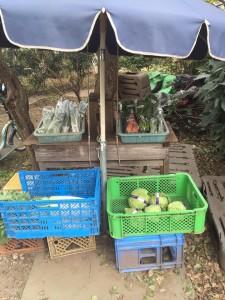 野菜販売所|立川七中近く|ヤクルトレディお勧め