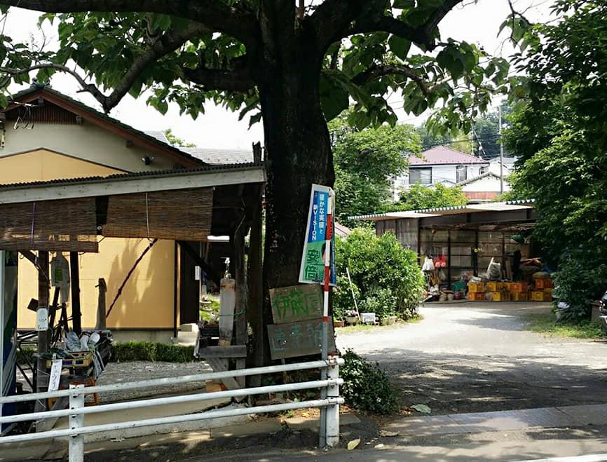 野菜直売所|稲城市坂浜|ヤクルトレディお勧め