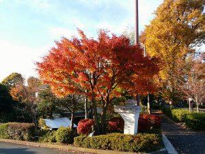子供達に大人気 個性際立つ陵南公園|八王子市長房町、東浅川町