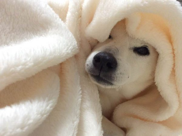 【愛犬の予防接種】について!効果と気になるタイミングと費用