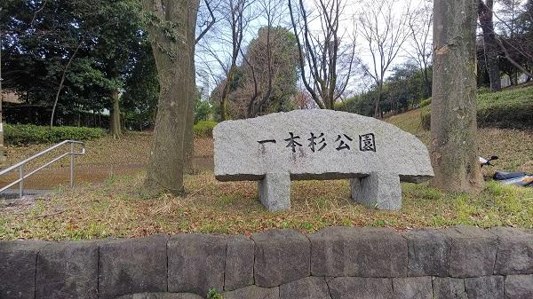 春のお出掛け・桜のオススメ!「一本杉公園」多摩市