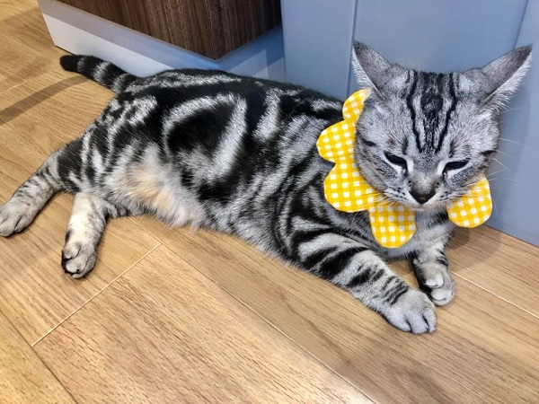 黄色の首輪をした猫の写真